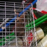 Rats, Rats Everywhere